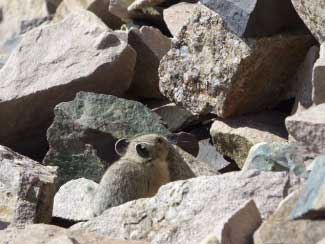 Resident of Castle Peak near Marble Retreat
