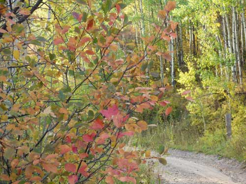 Leaves changing on the road to Marble Retreat