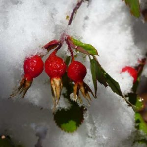 Early Snow in Marble
